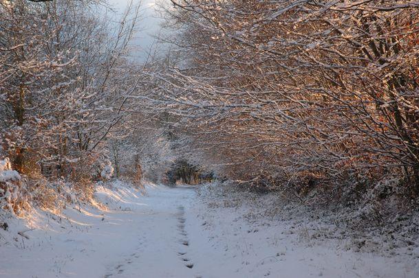 sentier-010-neige.jpg