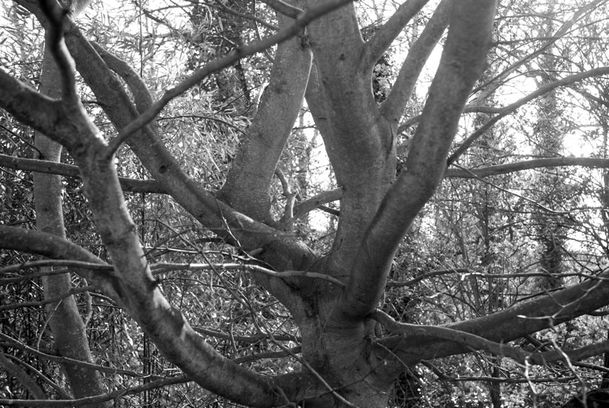 arbre-1128-val.jpg
