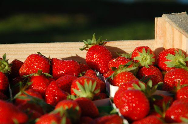 fraise14bd.JPG