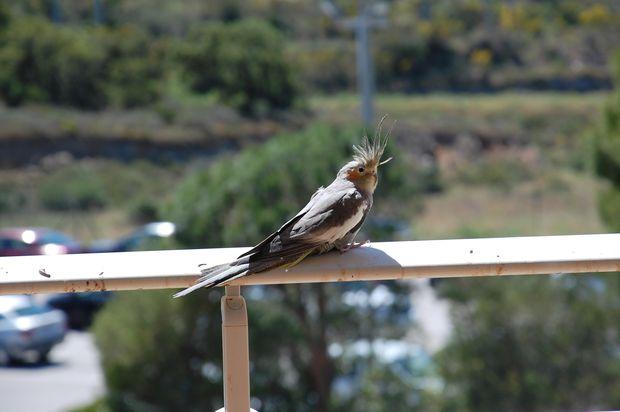 oiseaucerbere02.JPG