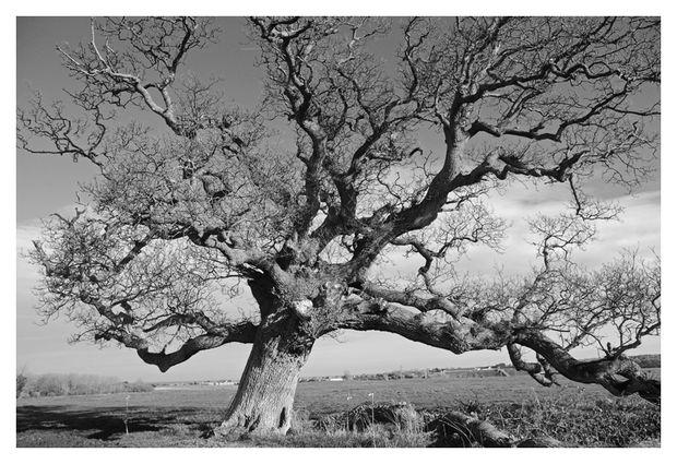 arbre-020-ans-enc.jpg