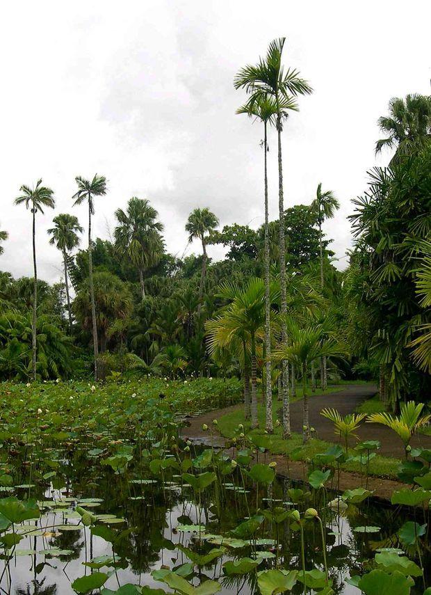 046 Botanic garden Seewoosagur Ramgoolam C