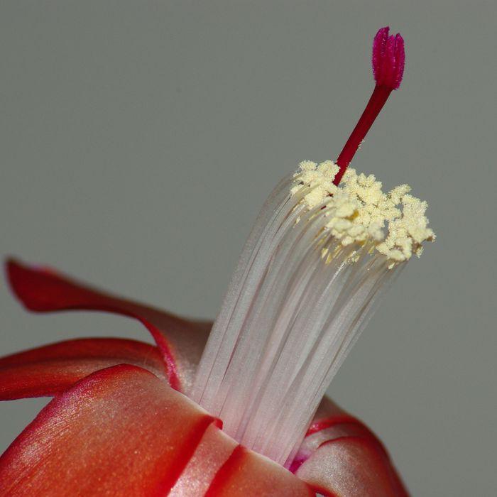 Fleur-4.jpg