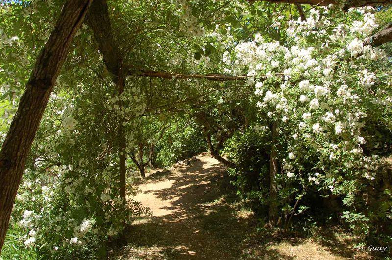 jardins-cadiot-2865.jpg