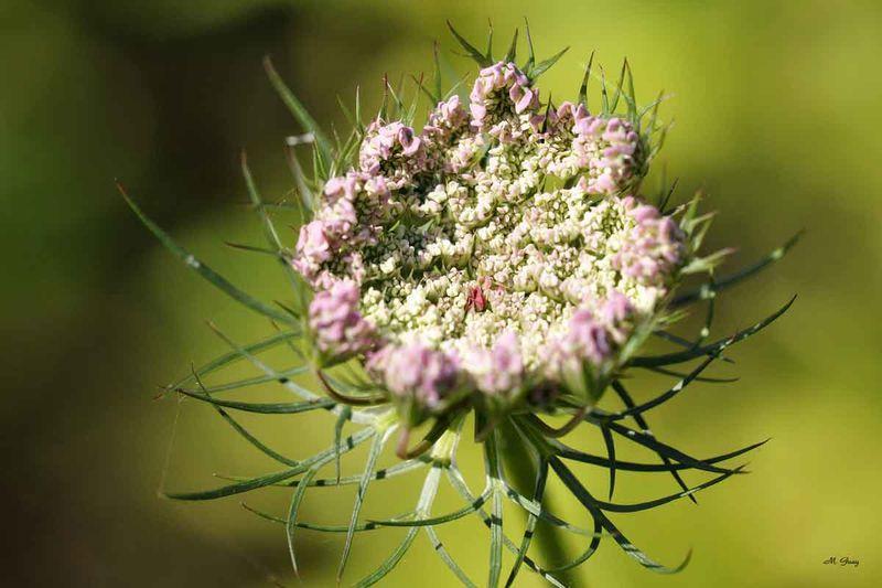 fleur-ronde-8632.jpg