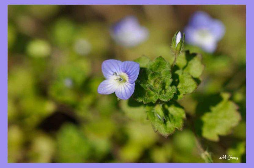 fleur-5419.jpg