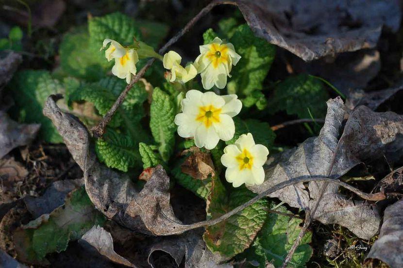 fleur-printemps-7577.jpg