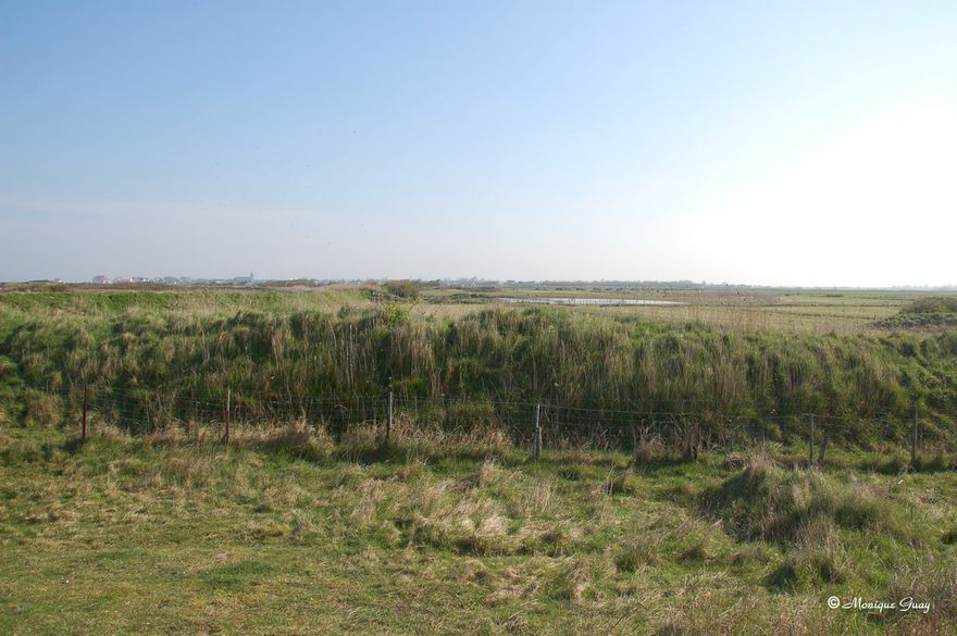 herbes-2626.jpg