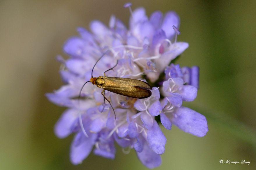 insecte-dore-2418.jpg