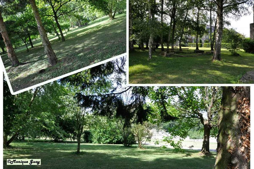ourscamp-arbres-1