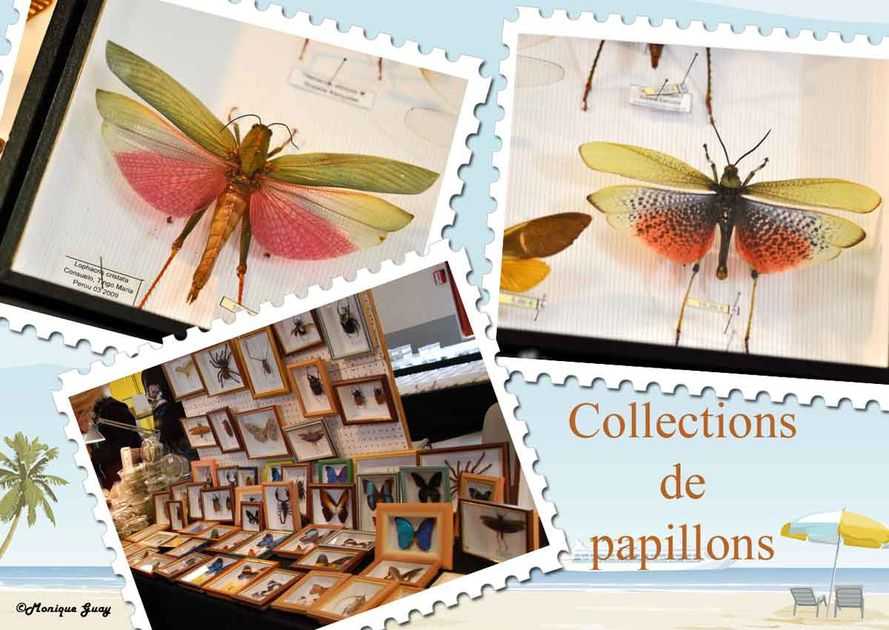 papillons-1-copie-1