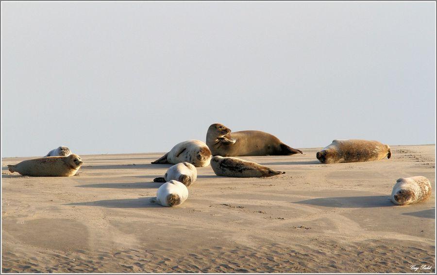 SEALS BERCK 5