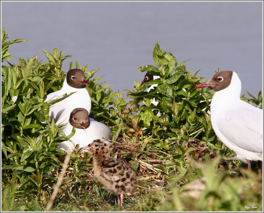 MOUETTES RIEUSES 5