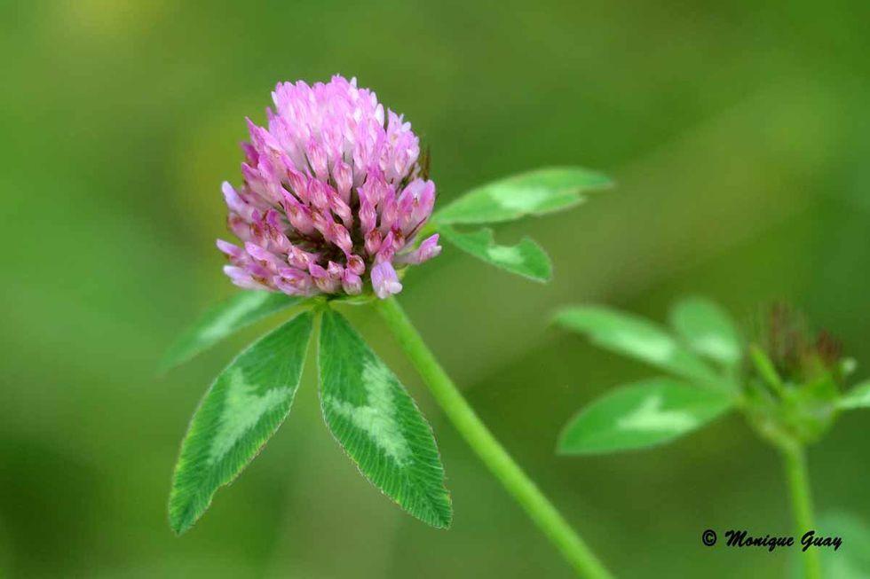 fleur-des-champs-3349.jpg